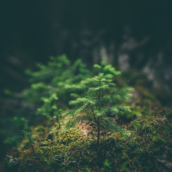 iPapers.co-Apple-iPhone-iPad-Macbook-iMac-wallpaper-mz92-green-moss-flower-nature-wallpaper
