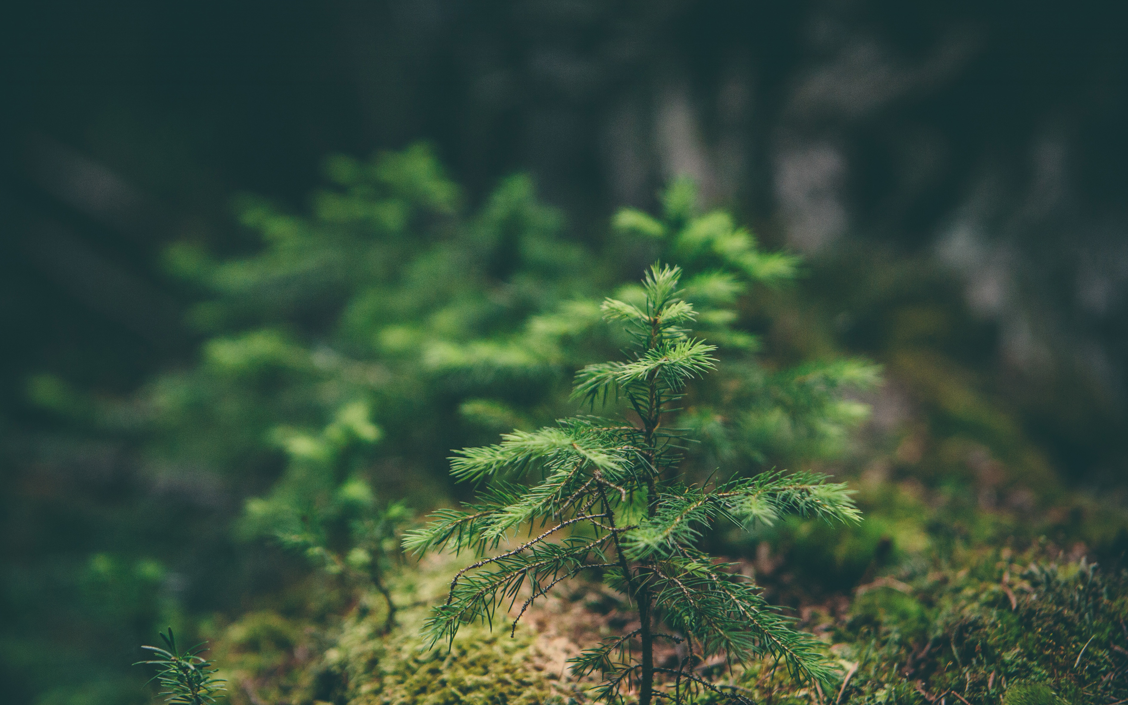 natural environment 4 essay Kibria, ahsan, essays on natural resources and economic development (2018 )  velopment with regard to the implications for environmental and economic.