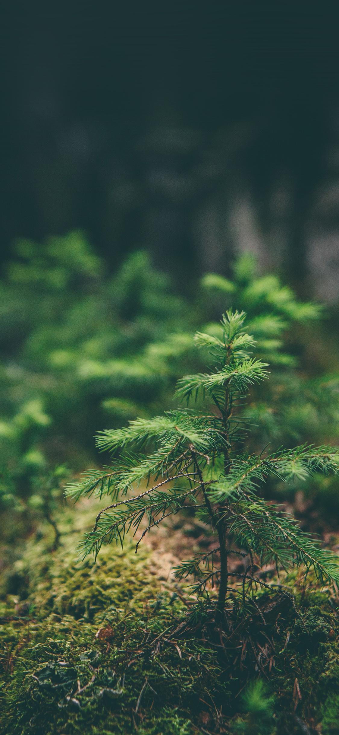 Mz92 Green Moss Flower Nature Wallpaper
