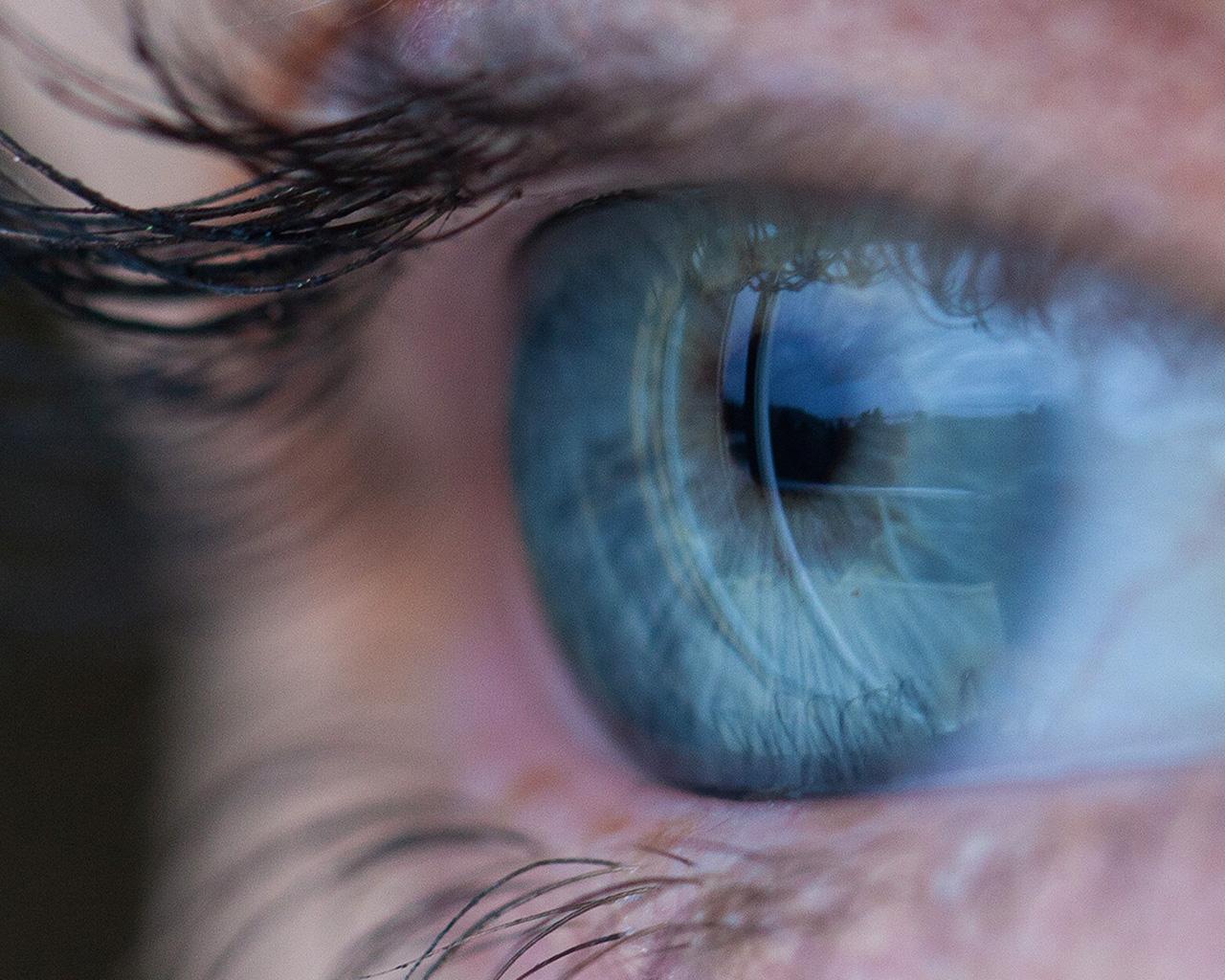 eye diseases essay