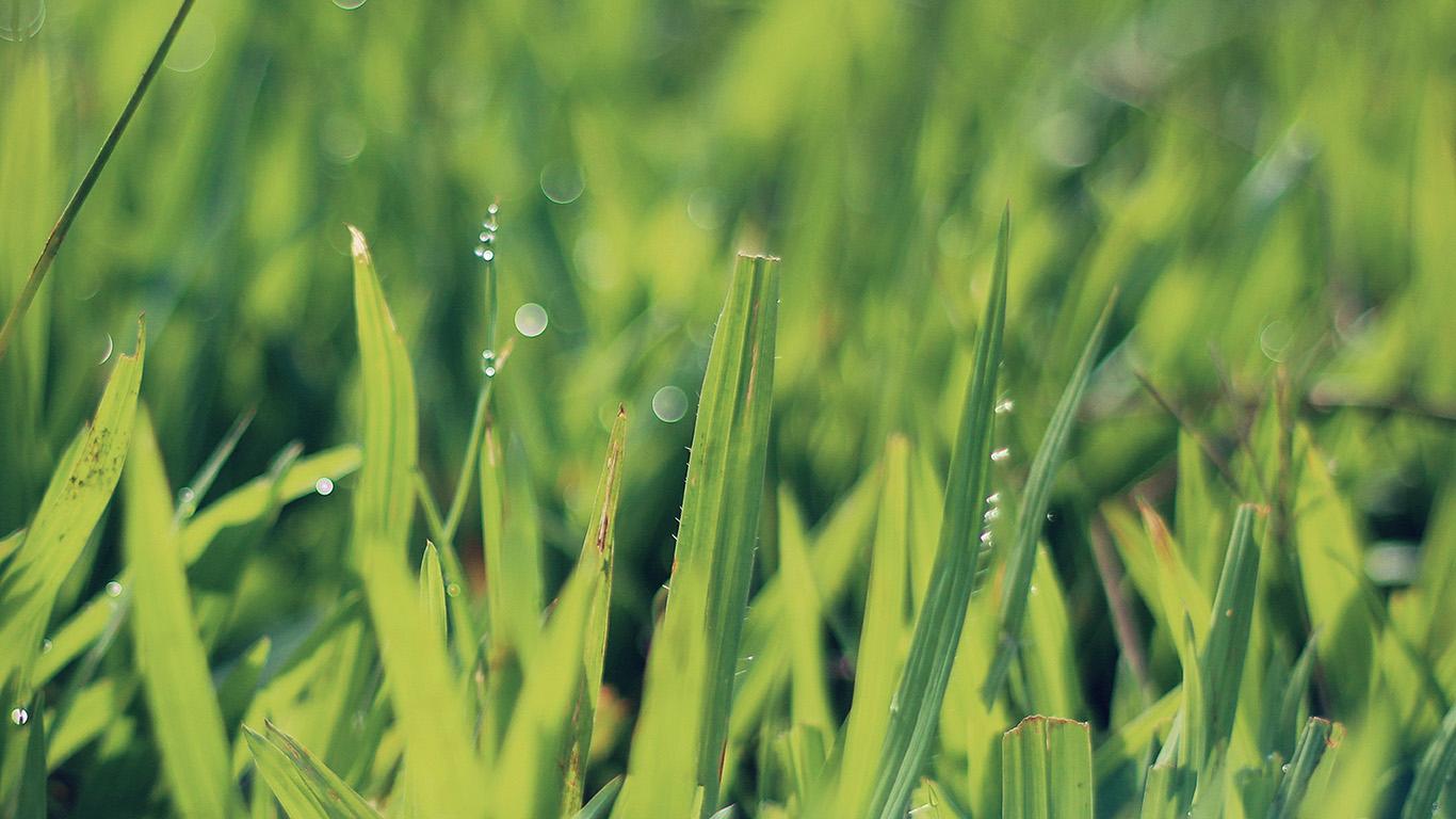 desktop-wallpaper-laptop-mac-macbook-air-na04-green-leaf-lawn-flower-nature-wallpaper