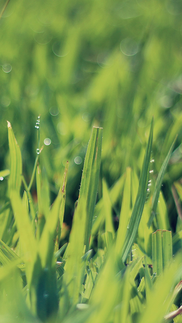 freeios8.com-iphone-4-5-6-plus-ipad-ios8-na04-green-leaf-lawn-flower-nature