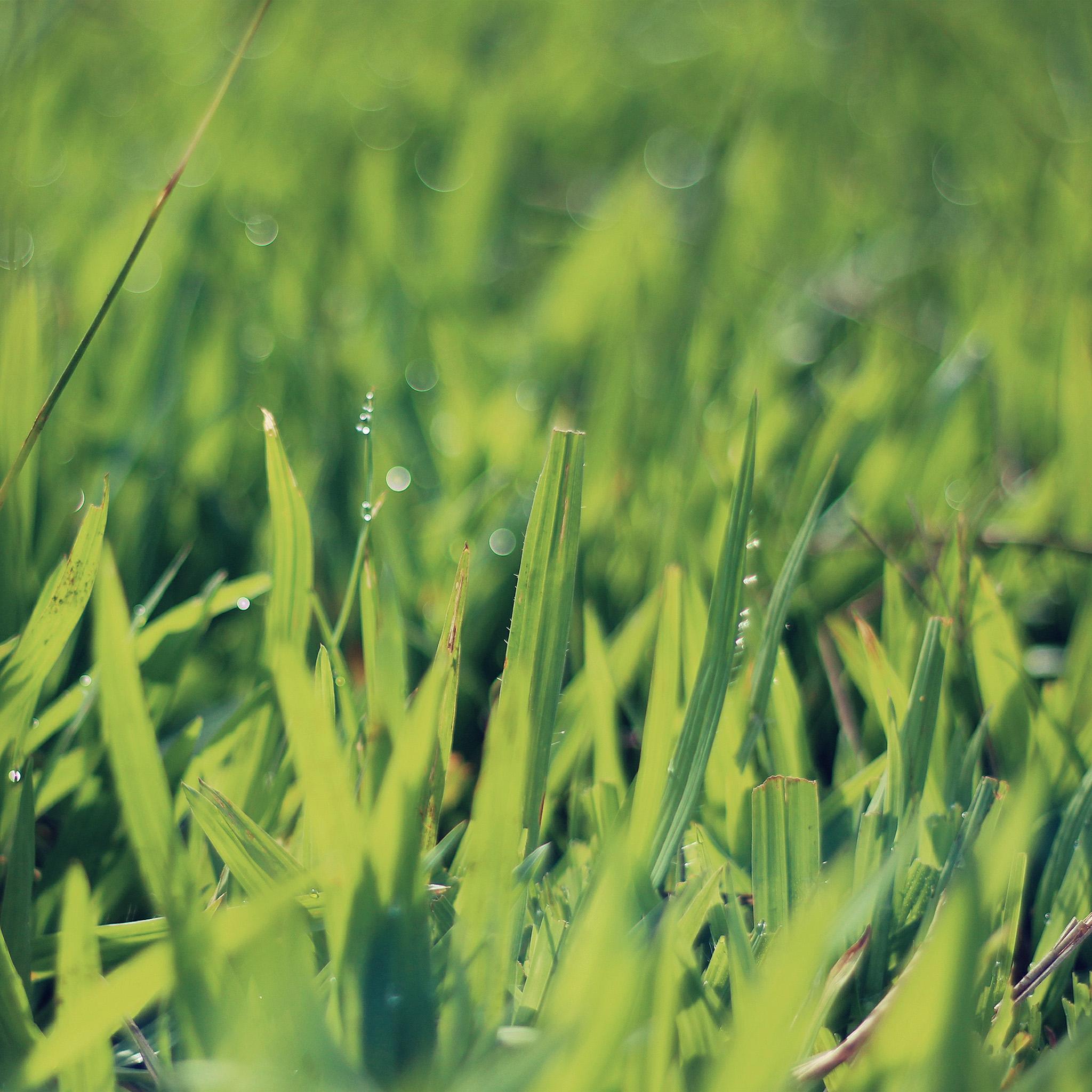 Na04-green-leaf-lawn-flower-nature-wallpaper