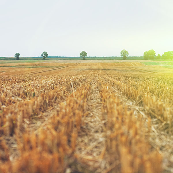 iPapers.co-Apple-iPhone-iPad-Macbook-iMac-wallpaper-na22-farm-fall-field-nature-yellow-flare-wallpaper