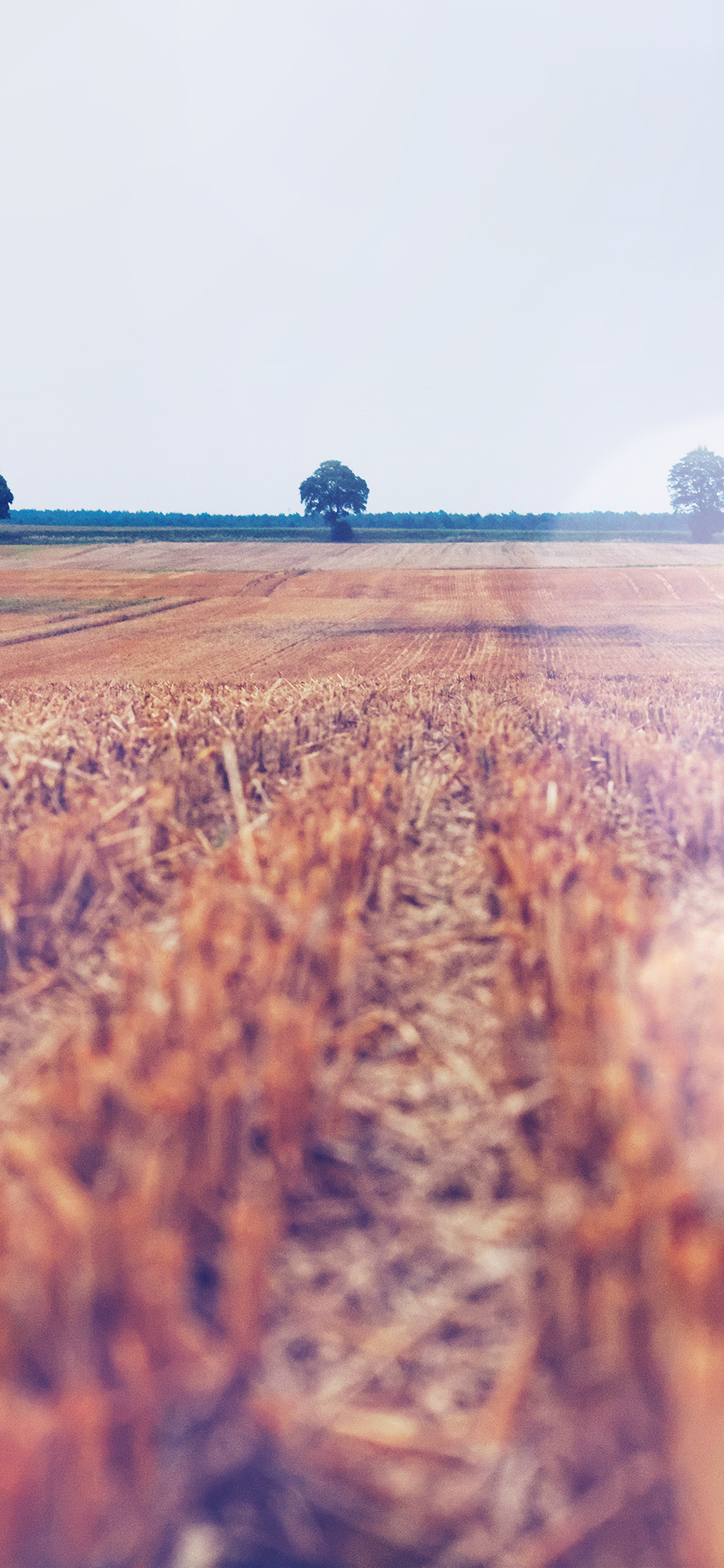 iPhonexpapers.com-Apple-iPhone-wallpaper-na23-farm-fall-field-nature-flare-blue