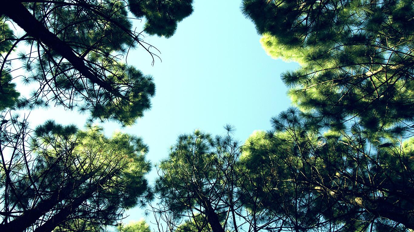 desktop-wallpaper-laptop-mac-macbook-air-na27-tree-mountain-sky-wood-nature-green-wallpaper