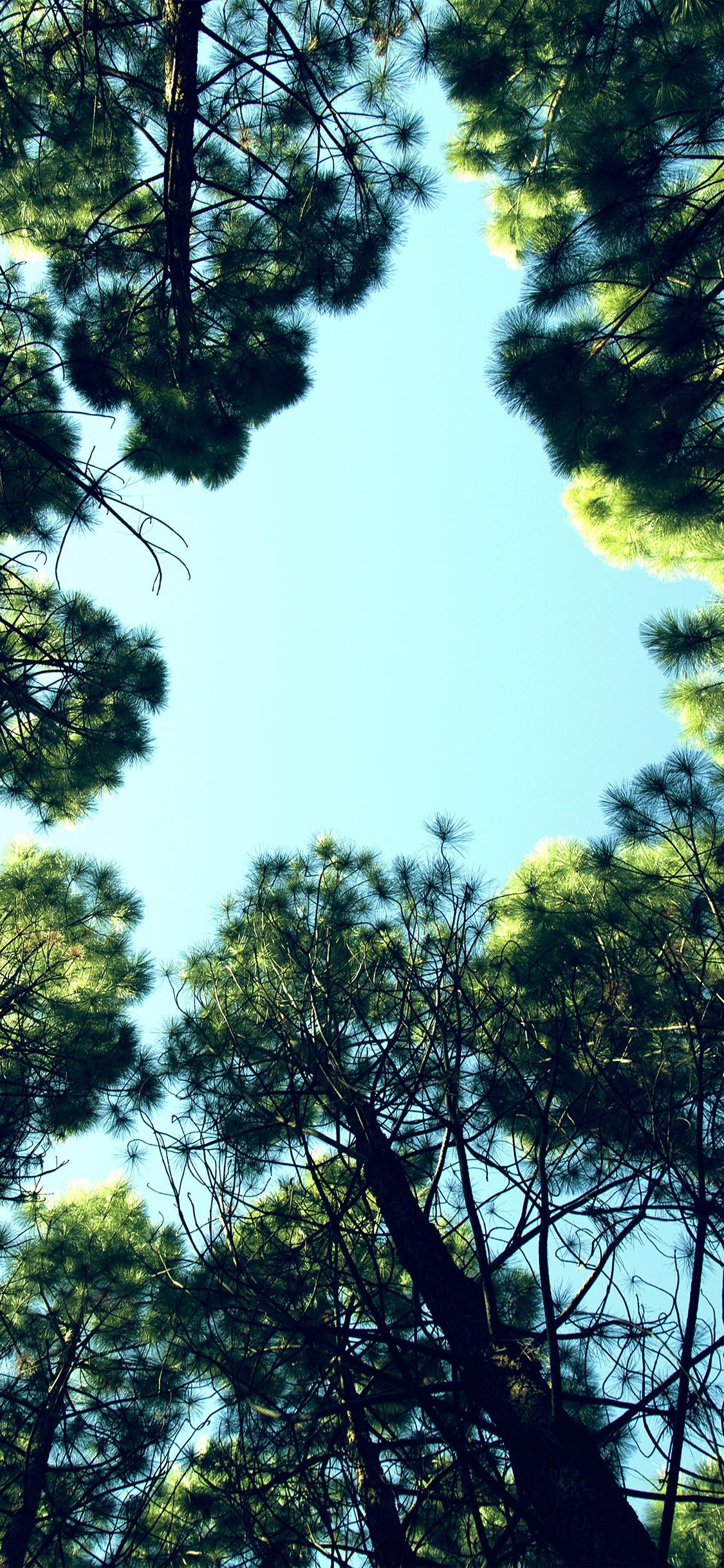 iPhoneXpapers.com-Apple-iPhone-wallpaper-na27-tree-mountain-sky-wood-nature-green