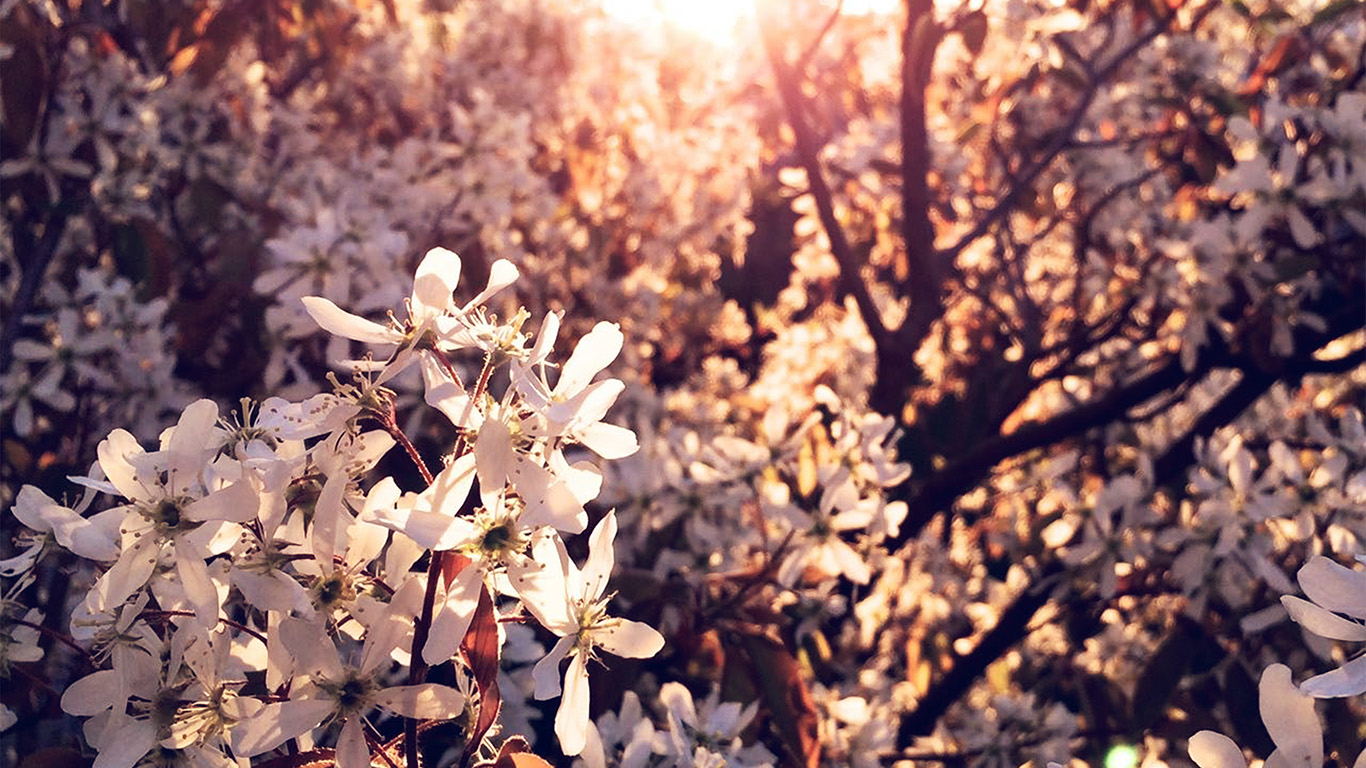 desktop-wallpaper-laptop-mac-macbook-air-na29-tree-flower-blossom-spring-nature-wallpaper