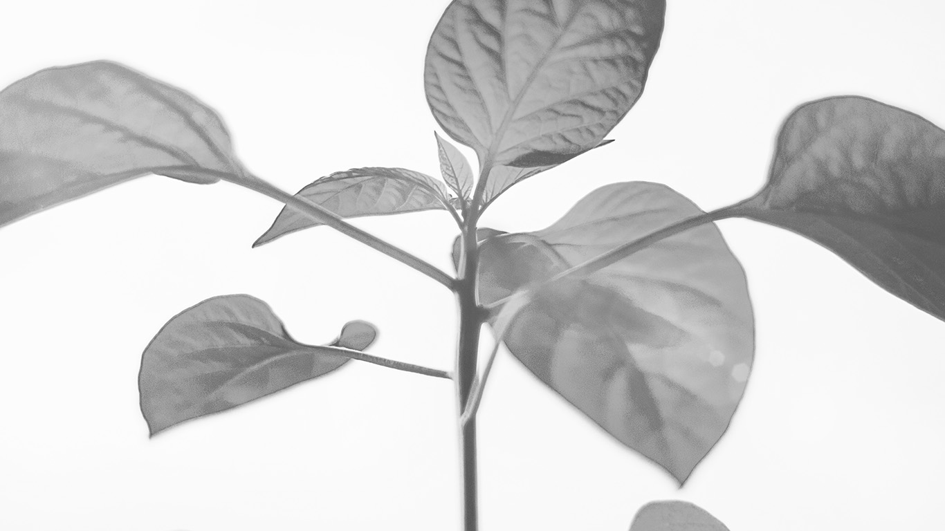 desktop-wallpaper-laptop-mac-macbook-air-na33-flower-leaf-simple-minimal-nature-bw-wallpaper