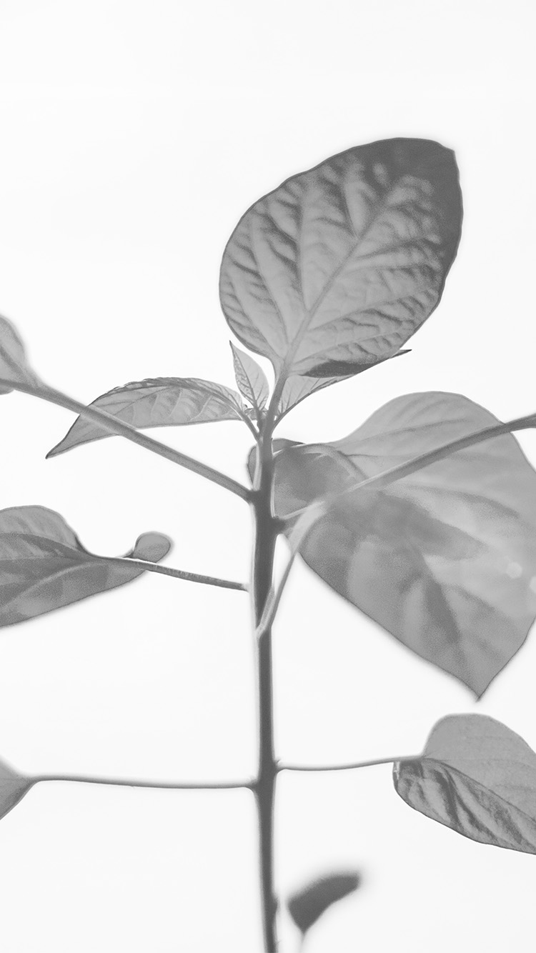 iPhone6papers.co-Apple-iPhone-6-iphone6-plus-wallpaper-na33-flower-leaf-simple-minimal-nature-bw