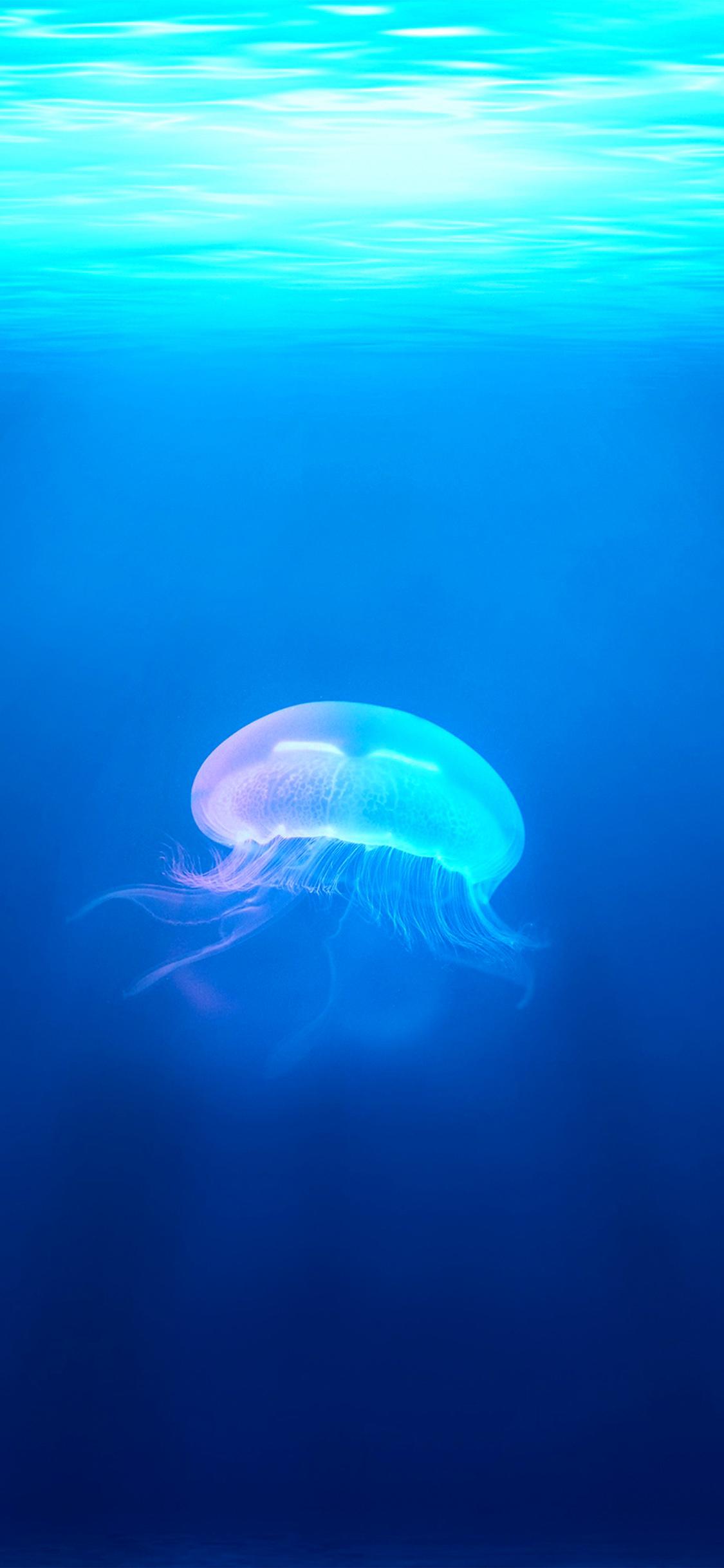 Iphonexpapers Com Iphone X Wallpaper Na45 Jellyfish Sea Ocean Water Blue Animal