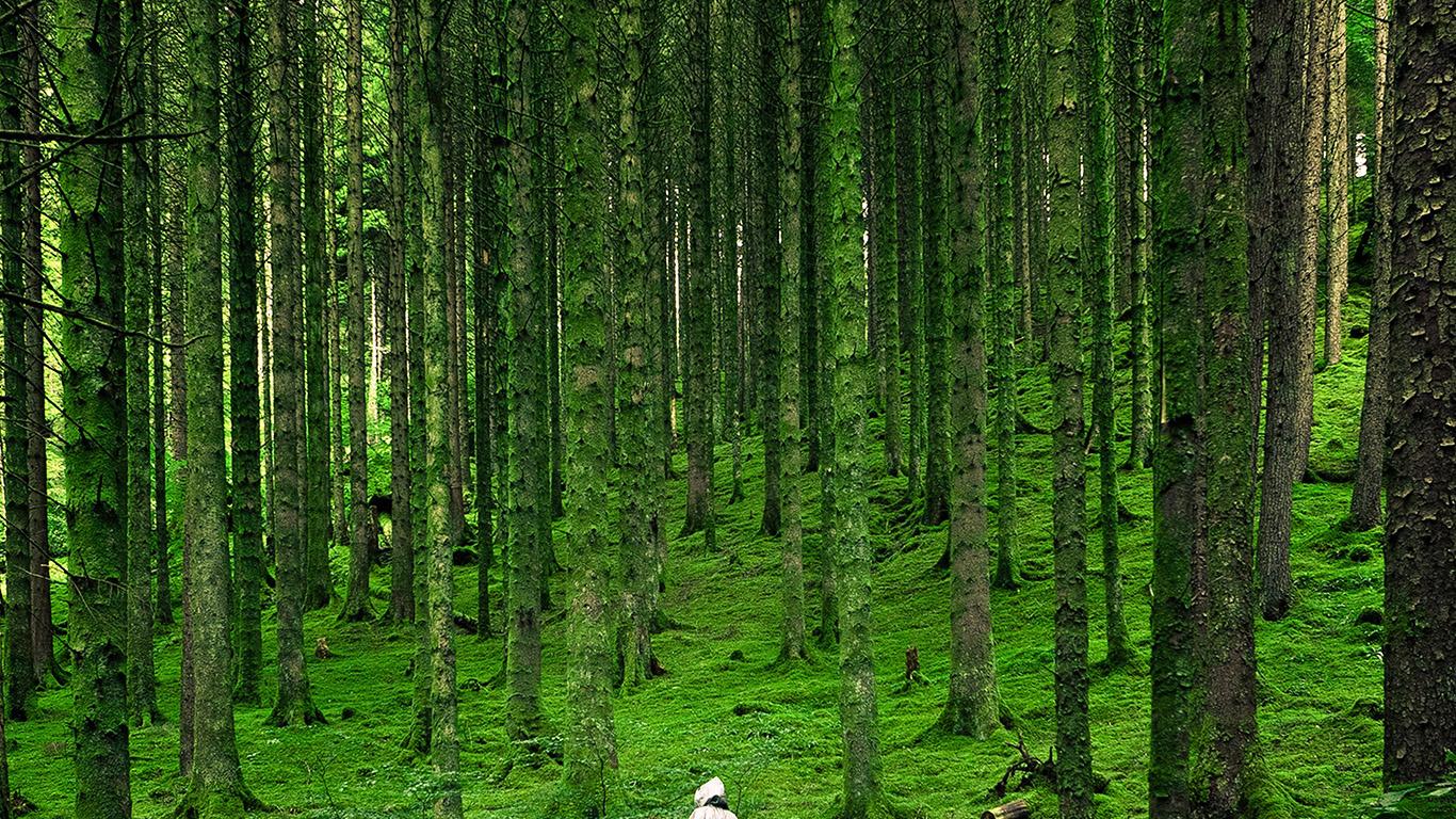 desktop-wallpaper-laptop-mac-macbook-air-na48-in-wood-forest-green-mountain-nature-wallpaper