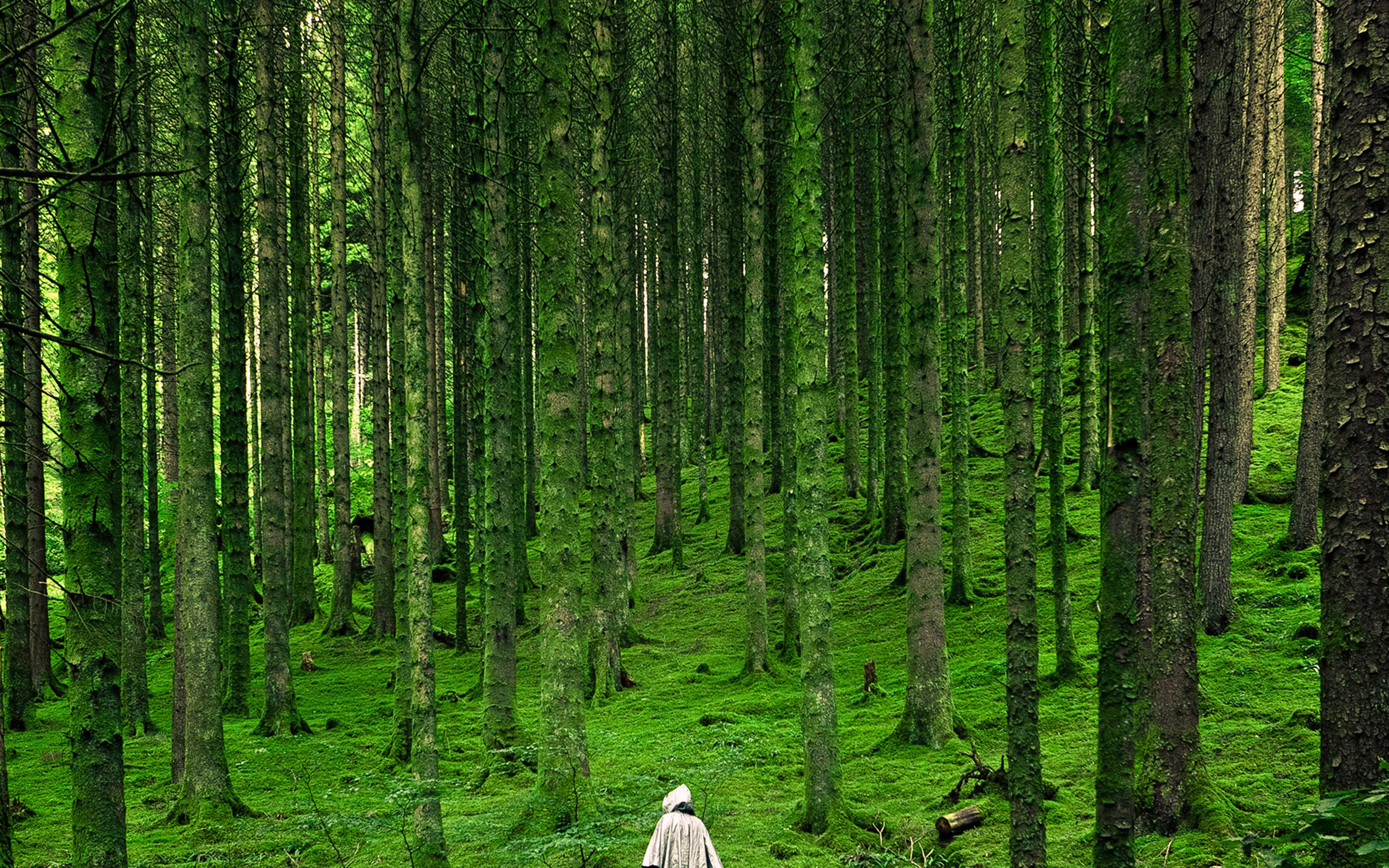 Na48 In Wood Forest Green Mountain Nature Wallpaper
