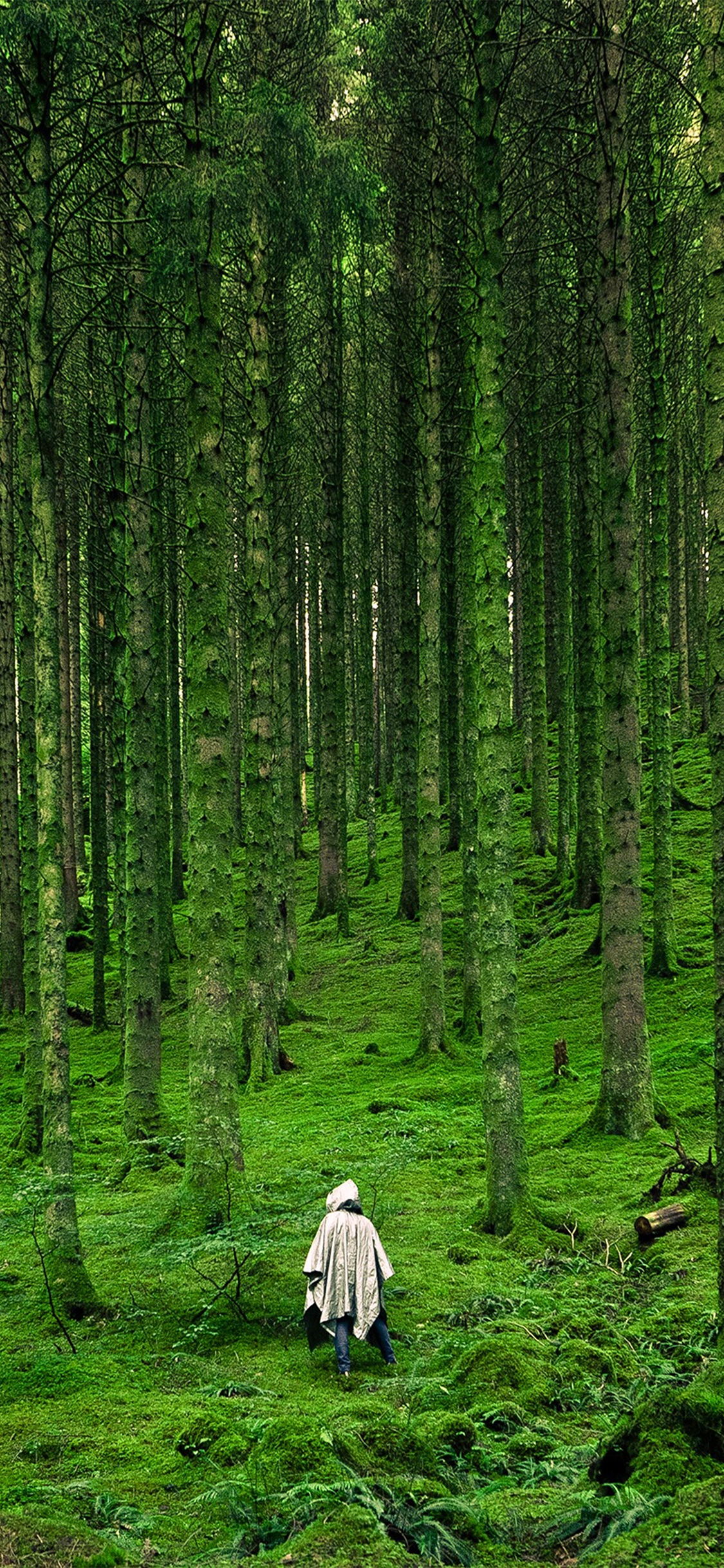 Iphonexpapers Com Iphone X Wallpaper Na48 In Wood Forest Green Mountain Nature