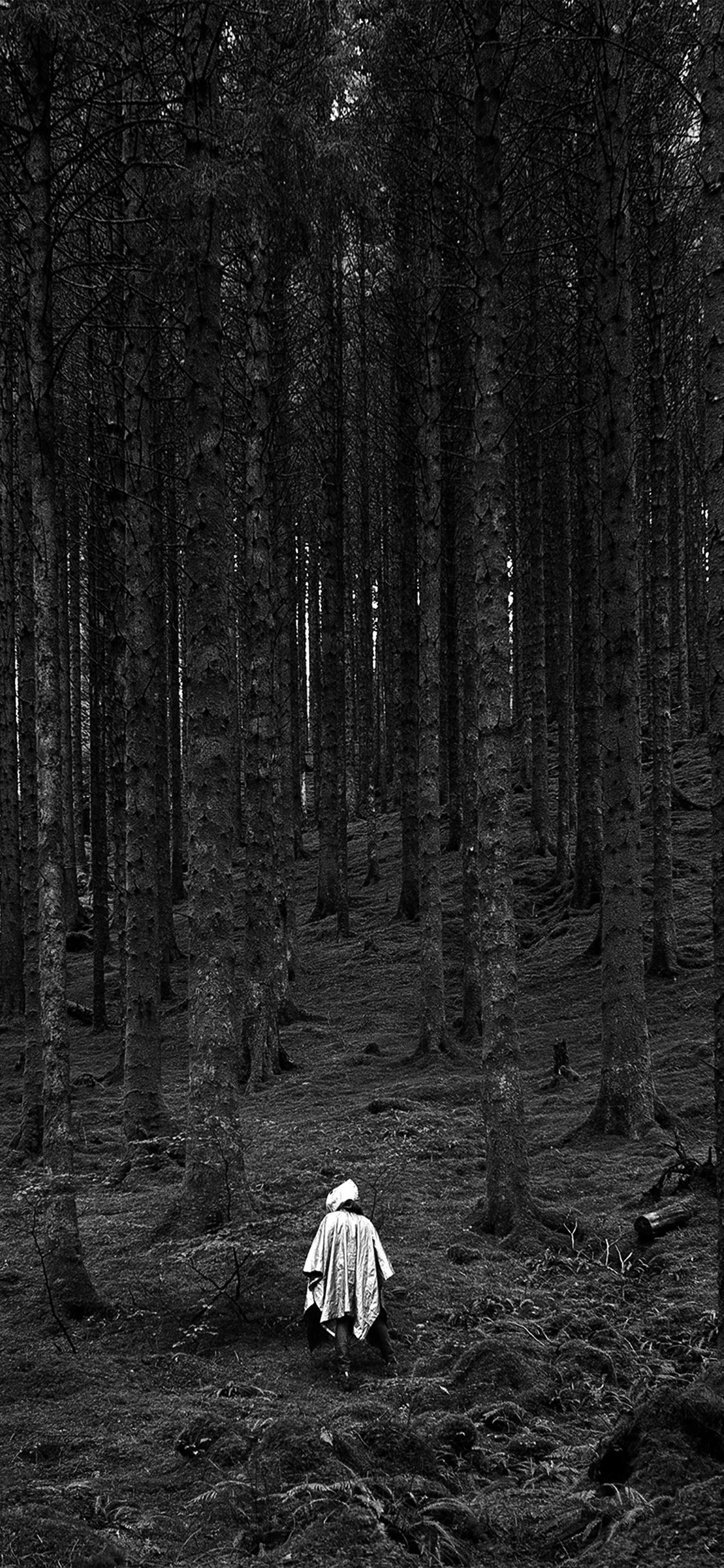 iPhonexpapers.com-Apple-iPhone-wallpaper-na50-in-wood-forest-mountain-nature-dark-bw