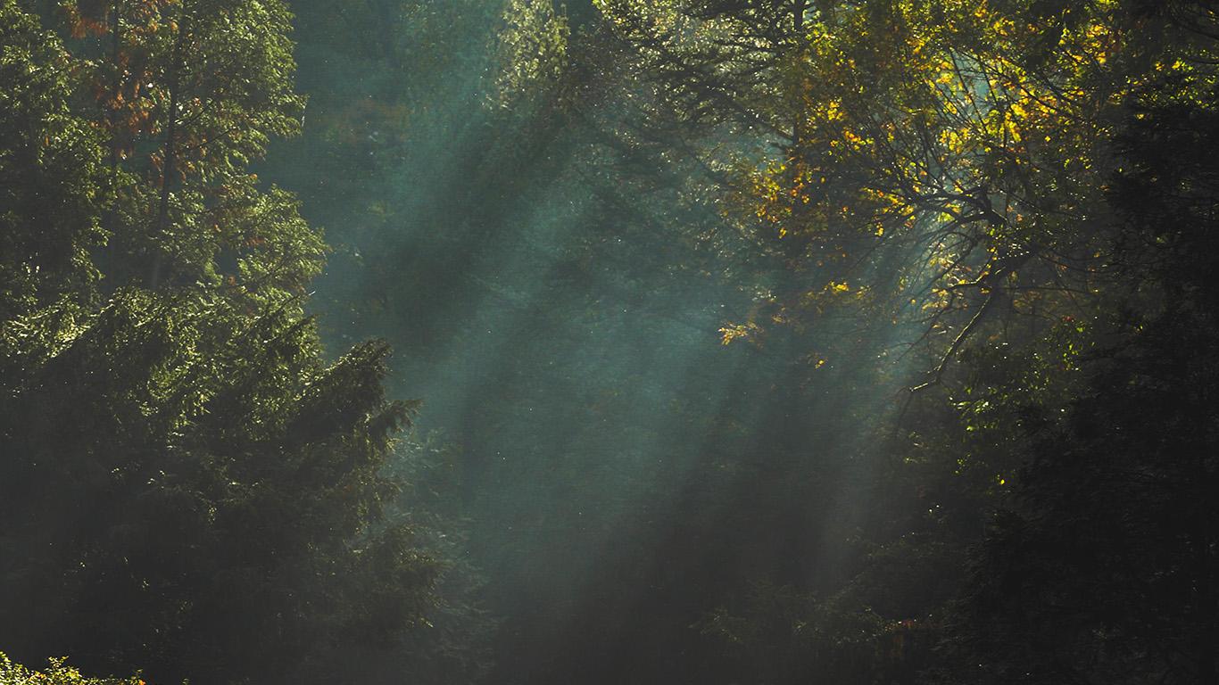 desktop-wallpaper-laptop-mac-macbook-air-na73-wood-nature-tree-sunshine-light-wallpaper
