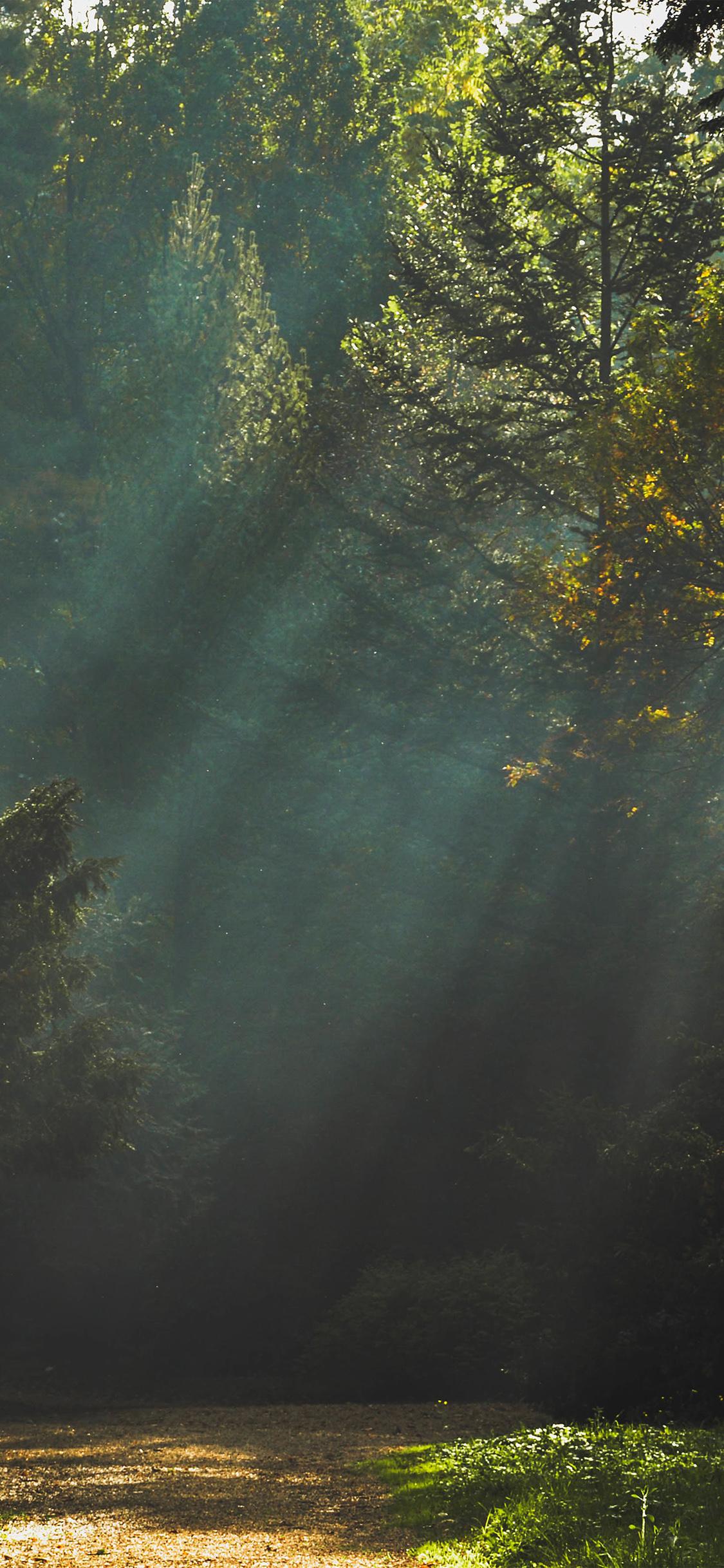 iPhoneXpapers.com-Apple-iPhone-wallpaper-na73-wood-nature-tree-sunshine-light