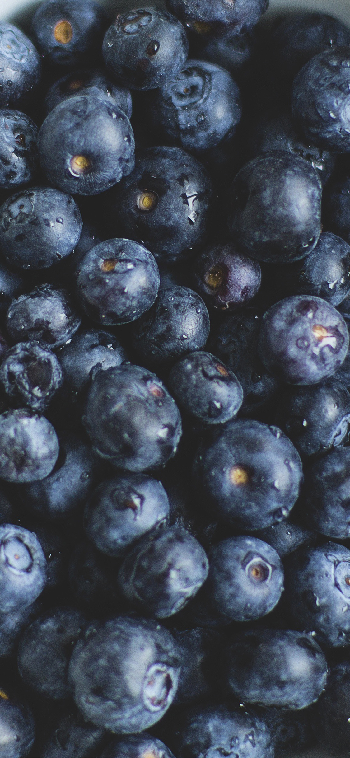Papers Co Iphone Wallpaper Na76 Blue Berry Healthy Fruit Eat Food Nature