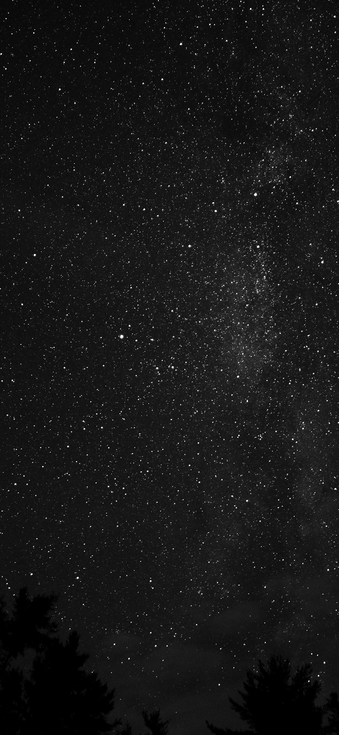 iPhonexpapers.com-Apple-iPhone-wallpaper-na99-night-sky-milkyway-tree-wood-nature-bw-dark