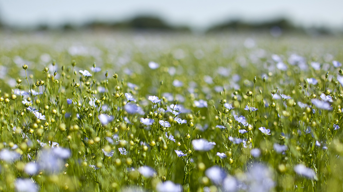 desktop-wallpaper-laptop-mac-macbook-air-nb00-field-green-cosmos-flower-spring-nature-wallpaper