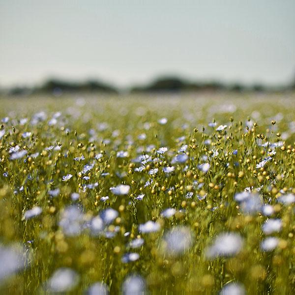 iPapers.co-Apple-iPhone-iPad-Macbook-iMac-wallpaper-nb02-field-blue-cosmos-flower-spring-nature-beautiful-wallpaper
