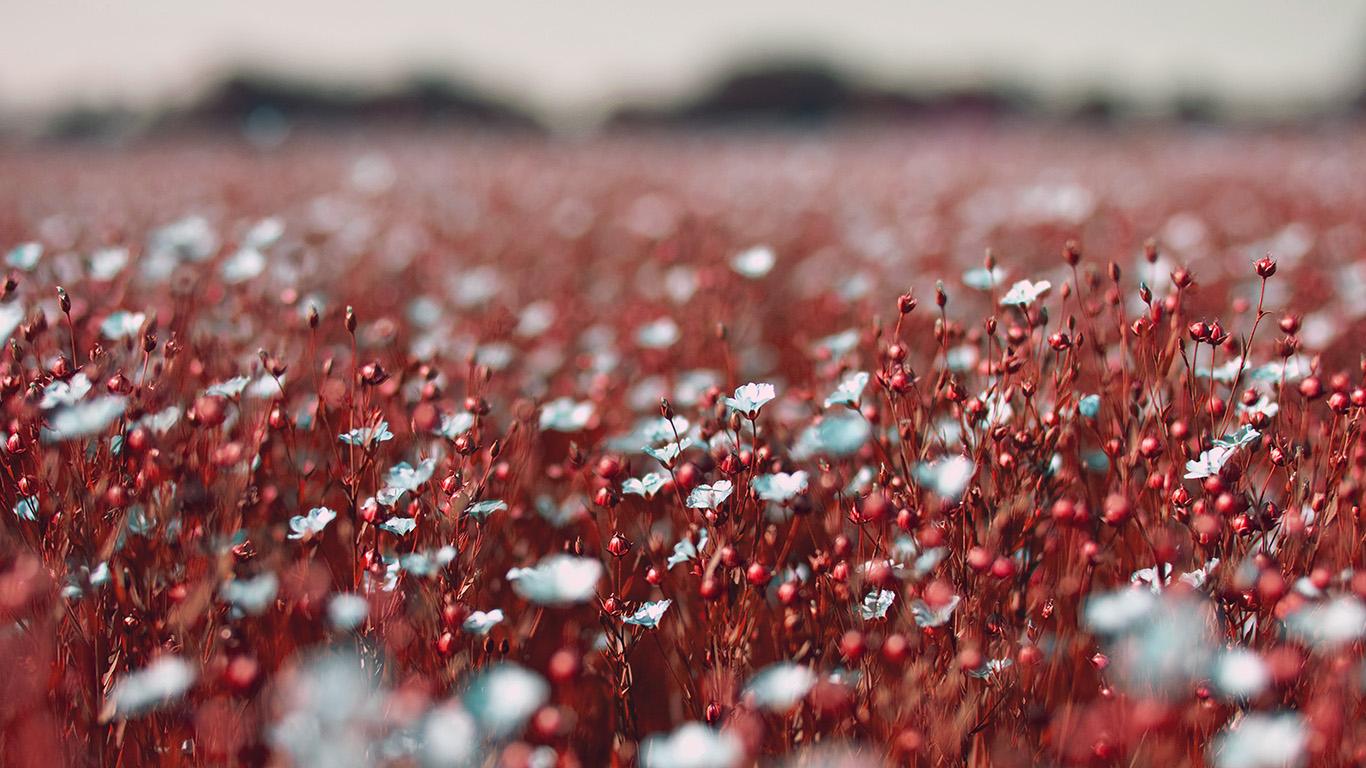 desktop-wallpaper-laptop-mac-macbook-air-nb03-field-red-cosmos-flower-spring-nature-beautiful-wallpaper