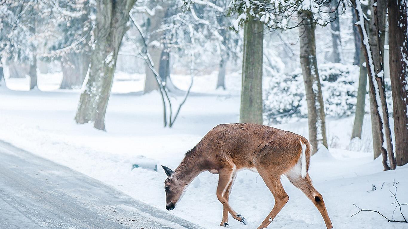 desktop-wallpaper-laptop-mac-macbook-air-nb25-christmas-deer-street-snow-winter-nature-animal-wallpaper