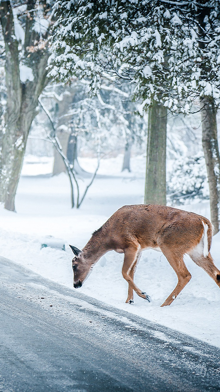 iPhone6papers.co-Apple-iPhone-6-iphone6-plus-wallpaper-nb25-christmas-deer-street-snow-winter-nature-animal