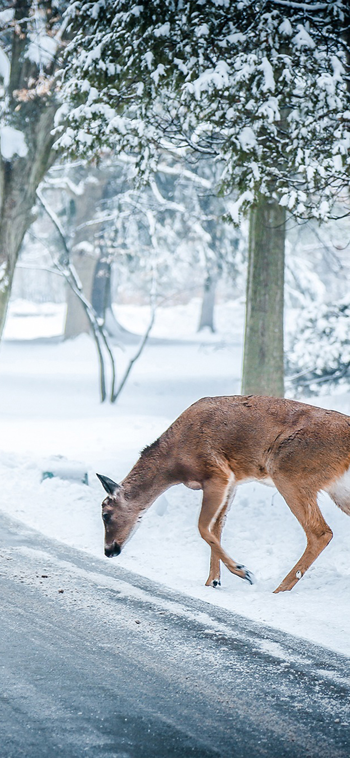 iPhoneXpapers.com-Apple-iPhone-wallpaper-nb25-christmas-deer-street-snow-winter-nature-animal