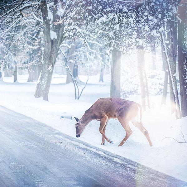 iPapers.co-Apple-iPhone-iPad-Macbook-iMac-wallpaper-nb26-christmas-deer-street-snow-winter-nature-animal-white-wallpaper