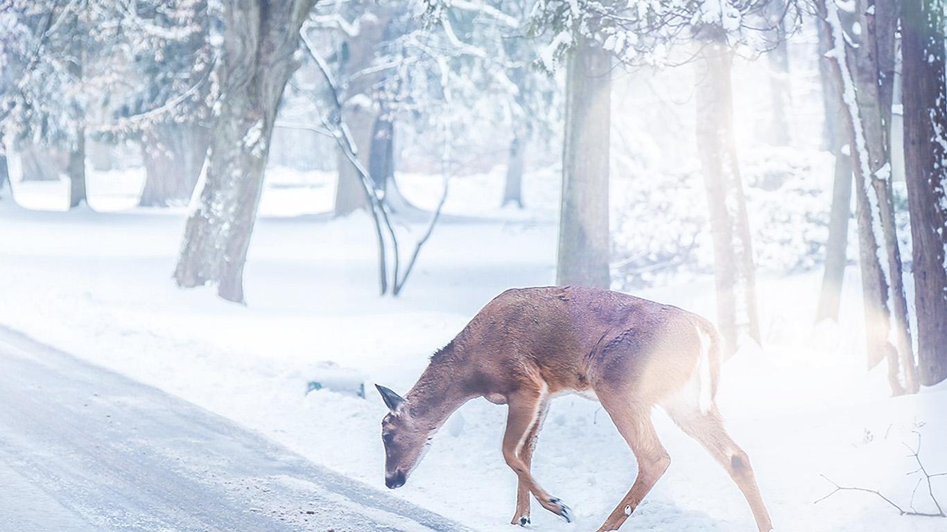desktop-wallpaper-laptop-mac-macbook-air-nb26-christmas-deer-street-snow-winter-nature-animal-white-wallpaper