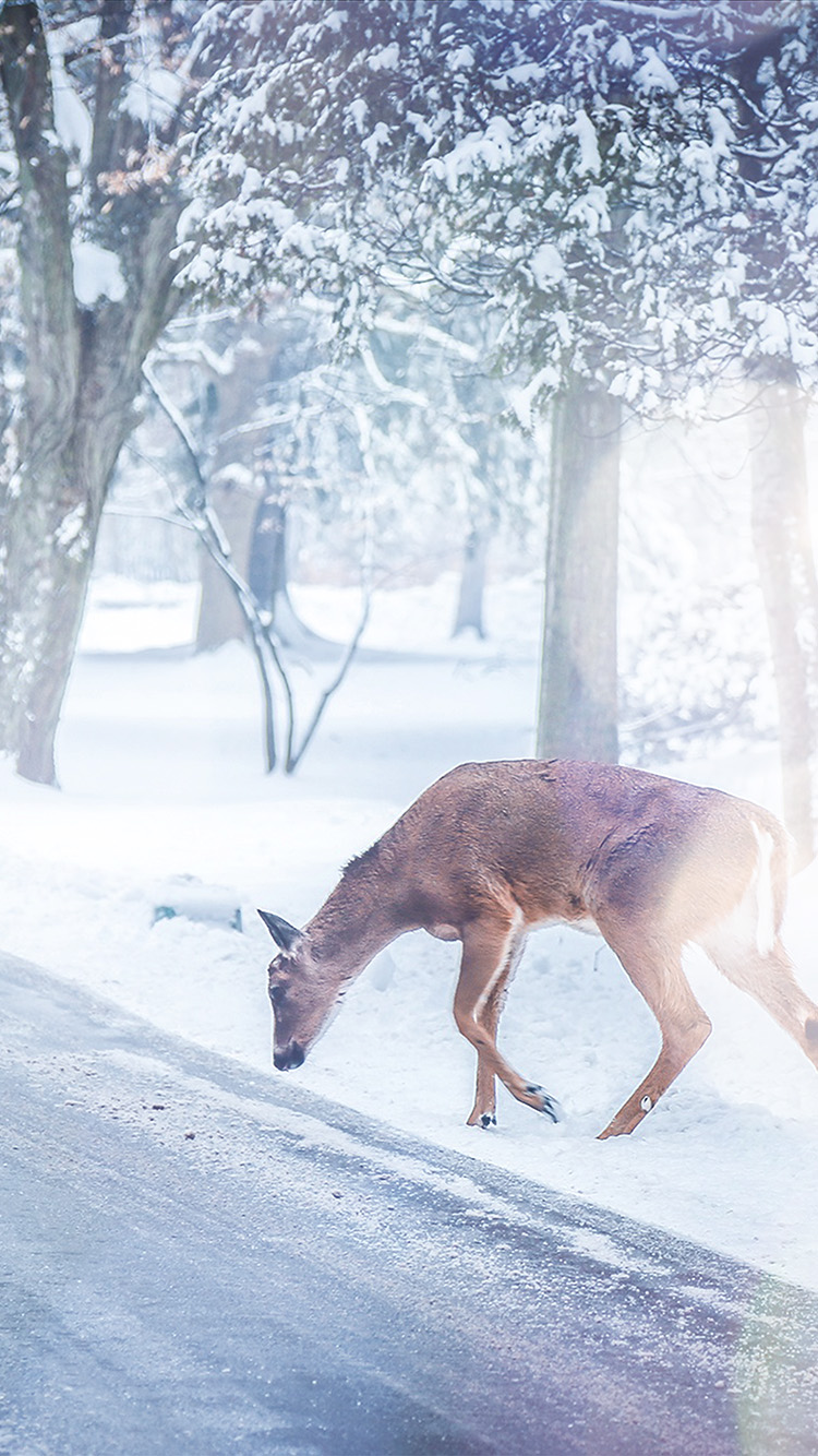 iPhone7papers.com-Apple-iPhone7-iphone7plus-wallpaper-nb26-christmas-deer-street-snow-winter-nature-animal-white