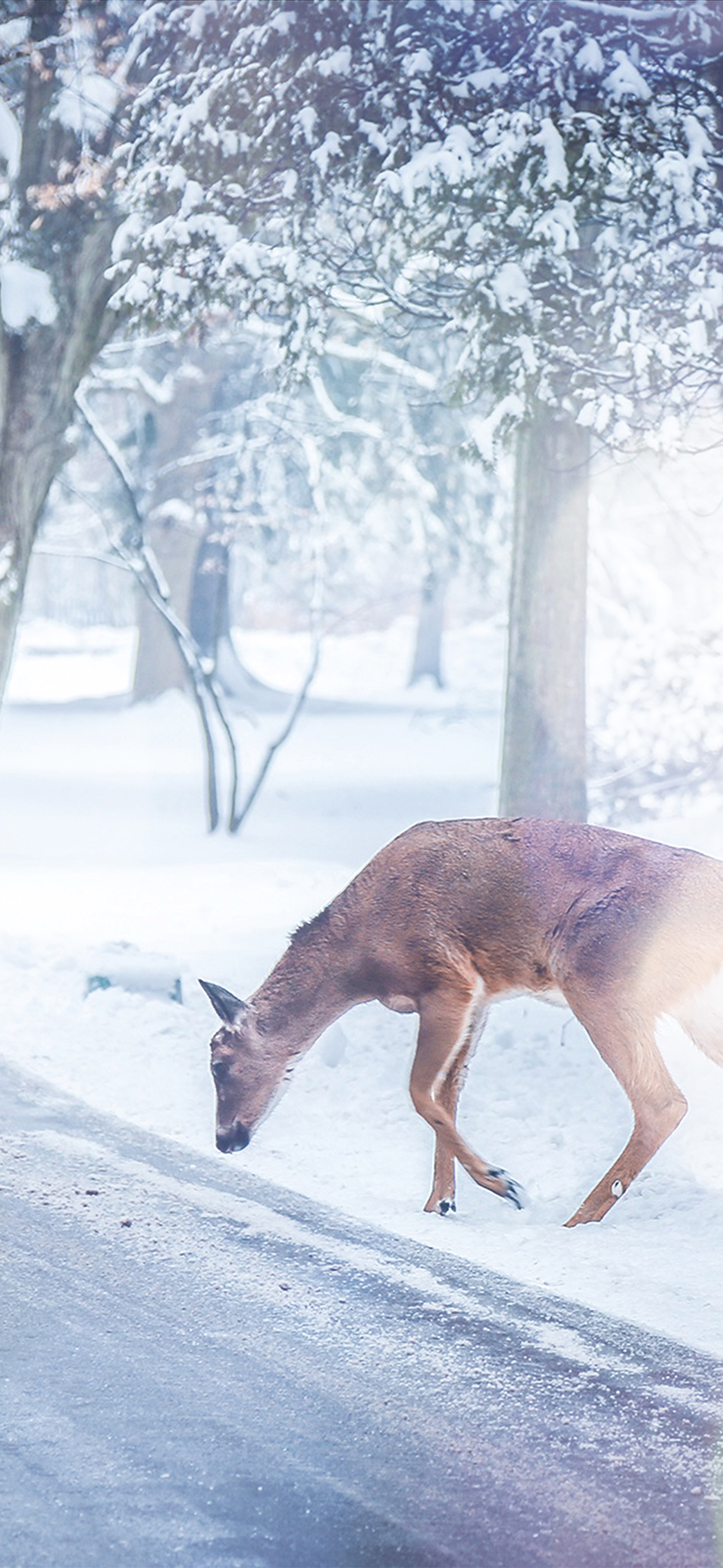 iPhoneXpapers.com-Apple-iPhone-wallpaper-nb26-christmas-deer-street-snow-winter-nature-animal-white