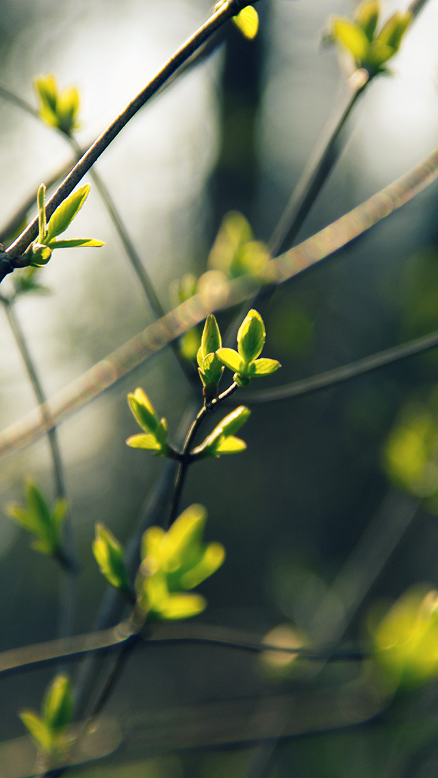 freeios8.com-iphone-4-5-6-plus-ipad-ios8-nb27-spring-leave-green-nature-bokeh-tree