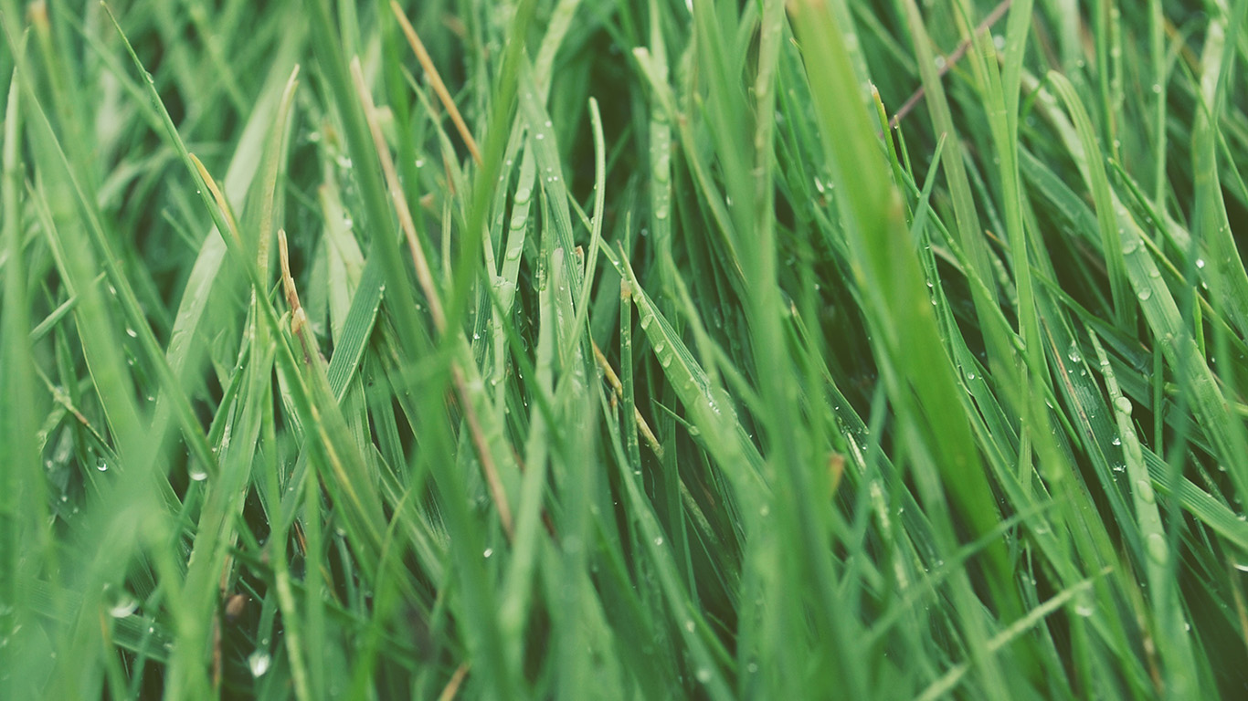 desktop-wallpaper-laptop-mac-macbook-air-nb52-after-rain-green-lawn-flower-nature-love-wallpaper