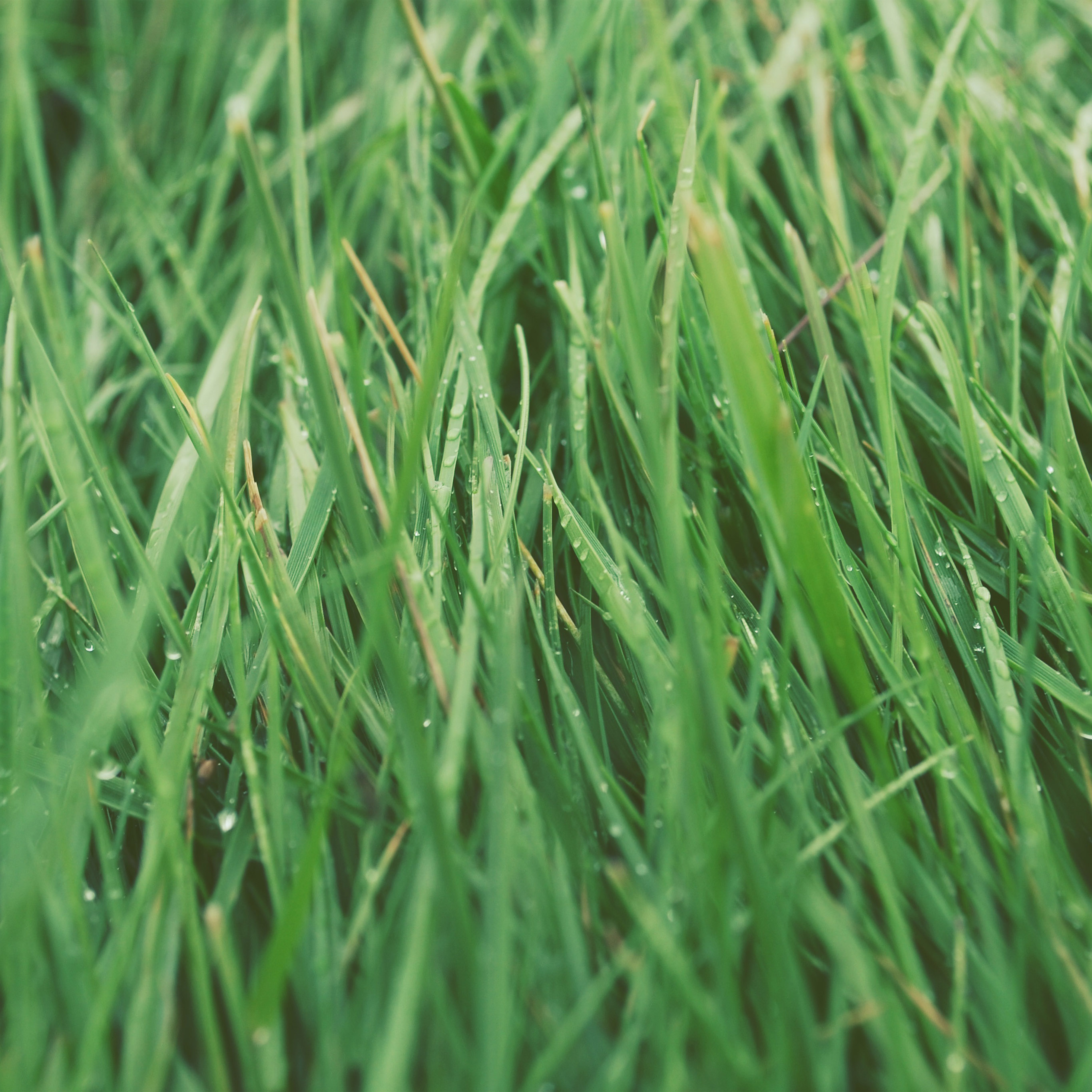 How Stupid Is Our Obsession With Lawns? (Rebroadcast)