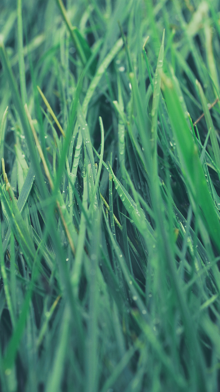 Papers.co-iPhone5-iphone6-plus-wallpaper-nb53-after-rain-green-blue-lawn-flower-nature-love