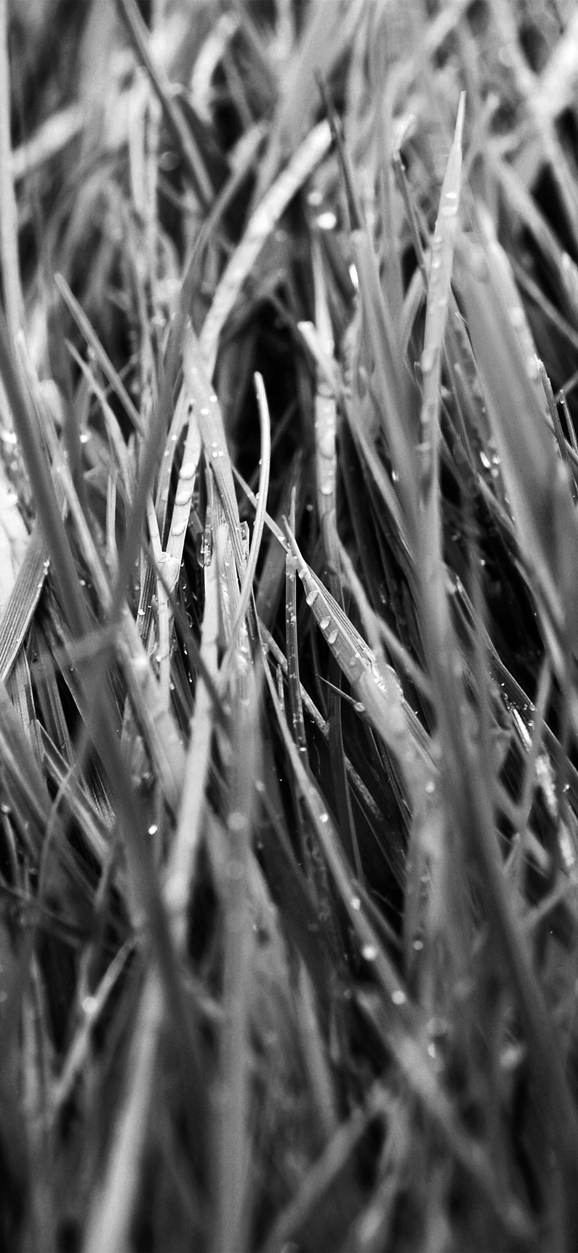 iPhoneXpapers.com-Apple-iPhone-wallpaper-nb54-after-rain-bw-dark-lawn-flower-nature-love