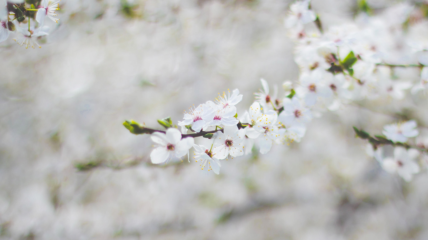 desktop-wallpaper-laptop-mac-macbook-air-nb64-spring-flower-cherry-blossom-bokeh-wallpaper