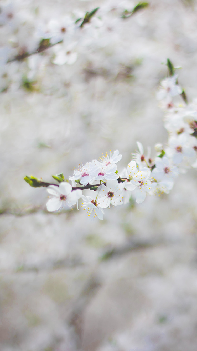 iPhone6papers.co-Apple-iPhone-6-iphone6-plus-wallpaper-nb64-spring-flower-cherry-blossom-bokeh