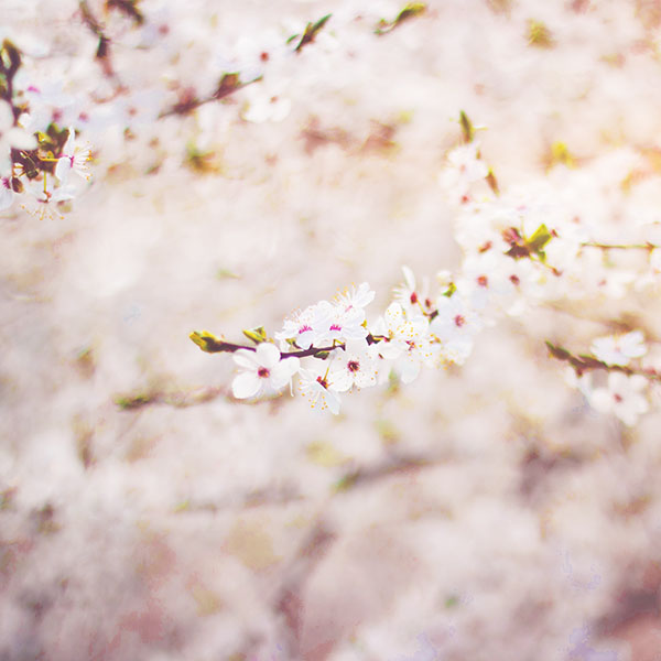 iPapers.co-Apple-iPhone-iPad-Macbook-iMac-wallpaper-nb65-spring-flower-cherry-blossom-bokeh-flare-wallpaper