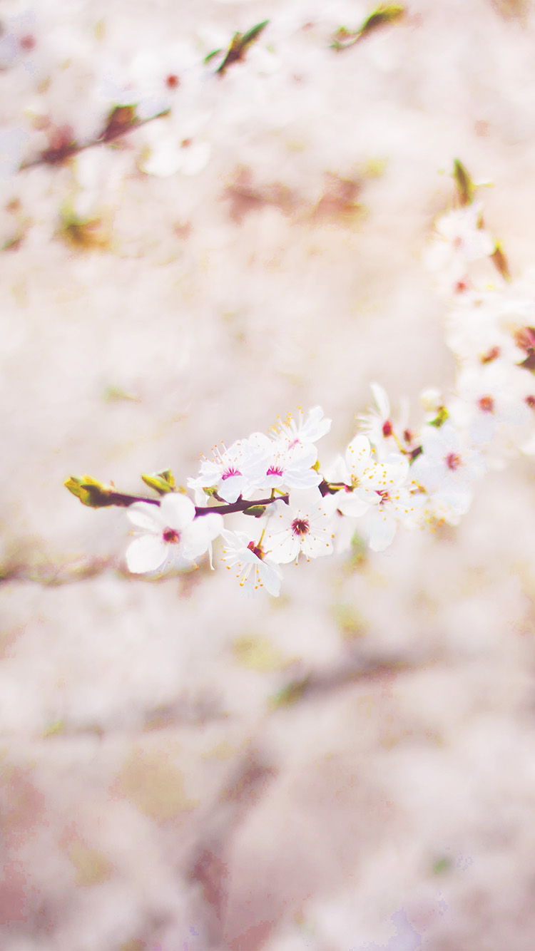 iPhone6papers.co-Apple-iPhone-6-iphone6-plus-wallpaper-nb65-spring-flower-cherry-blossom-bokeh-flare