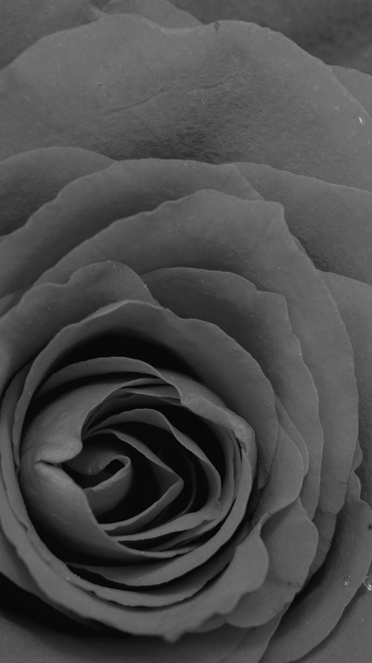 iPhone7papers.com-Apple-iPhone7-iphone7plus-wallpaper-nb74-rose-bw-dark-flower-nature-love