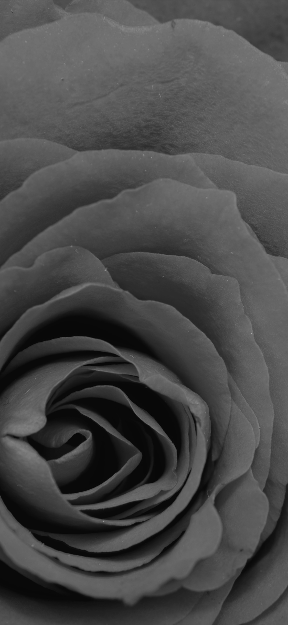 iPhoneXpapers.com-Apple-iPhone-wallpaper-nb74-rose-bw-dark-flower-nature-love