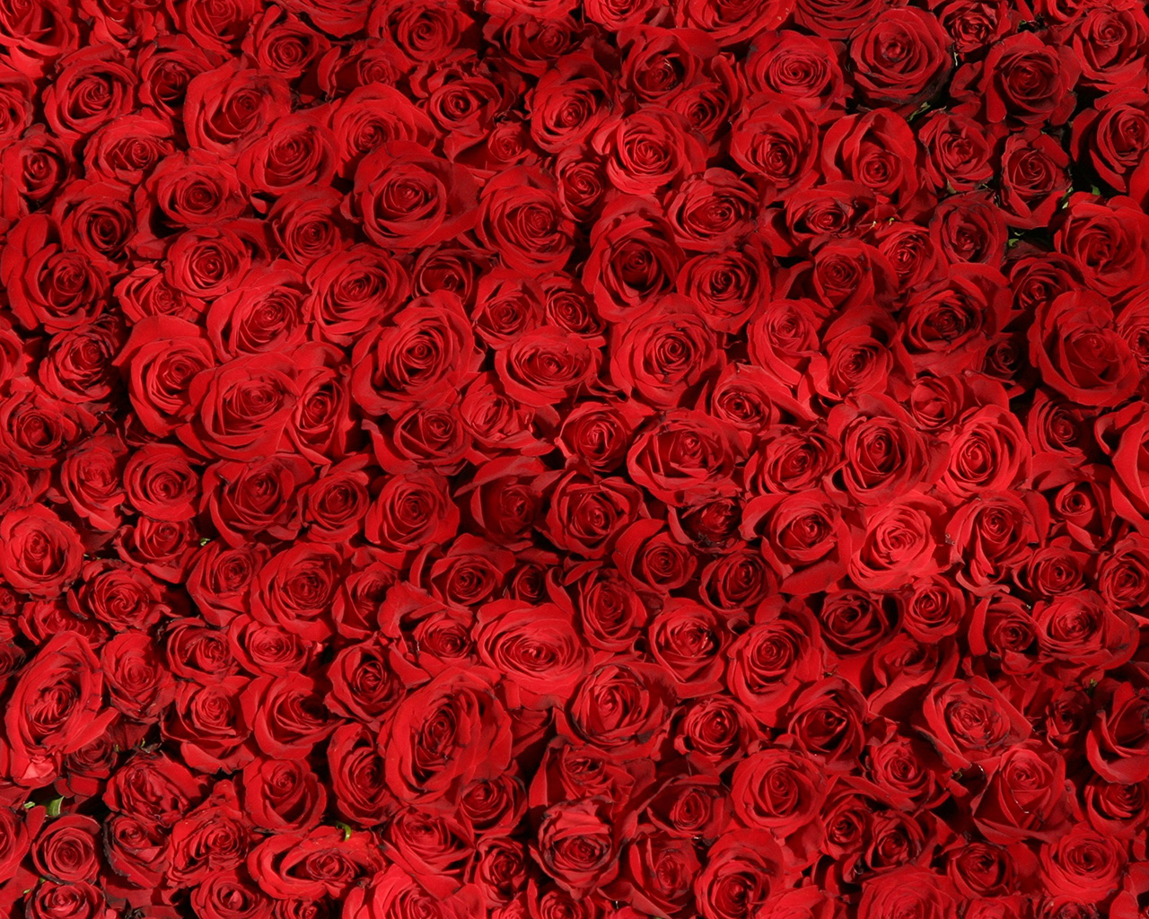 Nb79 Rose Red Pattern Flower Wallpaper