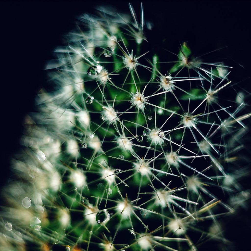 wallpaper-nb81-cactus-flower-micro-zoom-bokeh-wallpaper