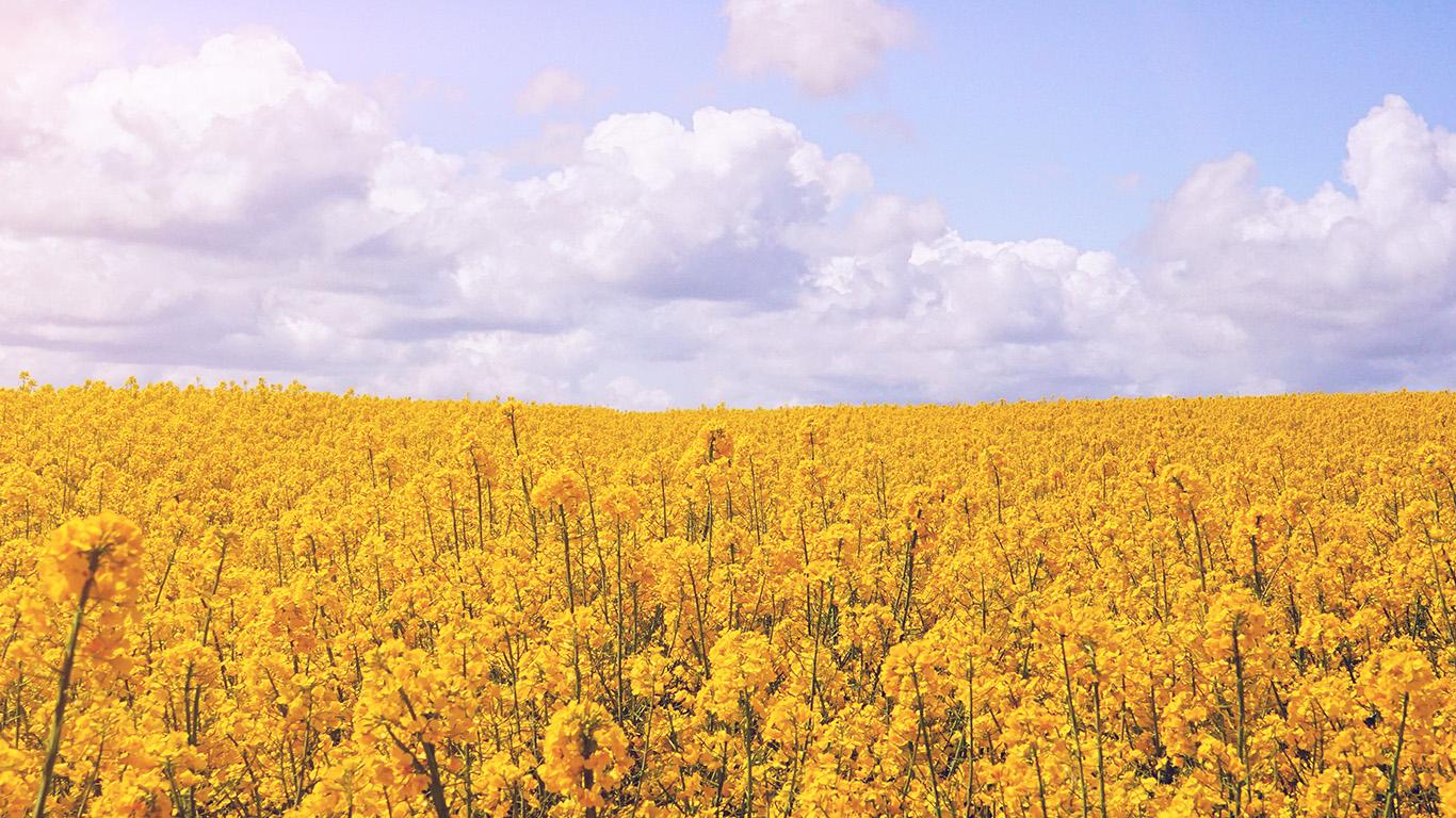Nb85 Yellow Flower Jeju Nari Flare Wallpaper