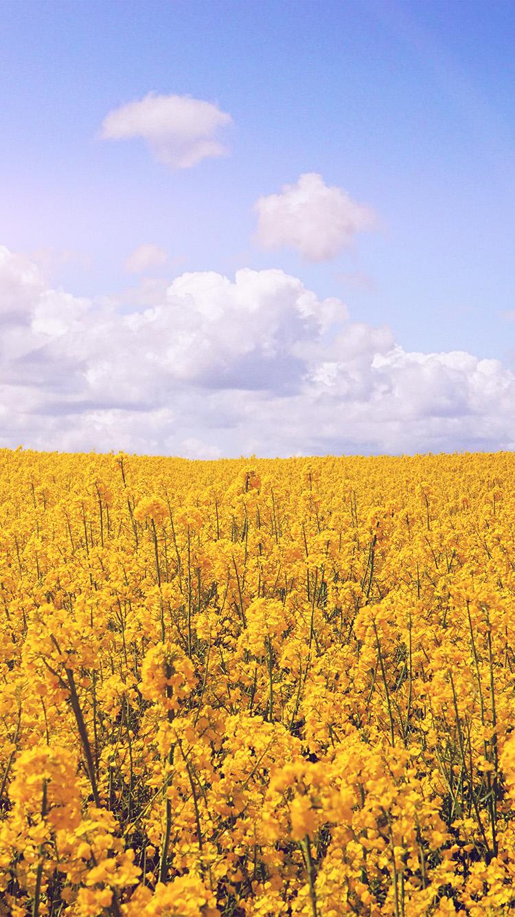 Freeios8 Com Iphone Wallpaper Nb85 Yellow Flower Jeju