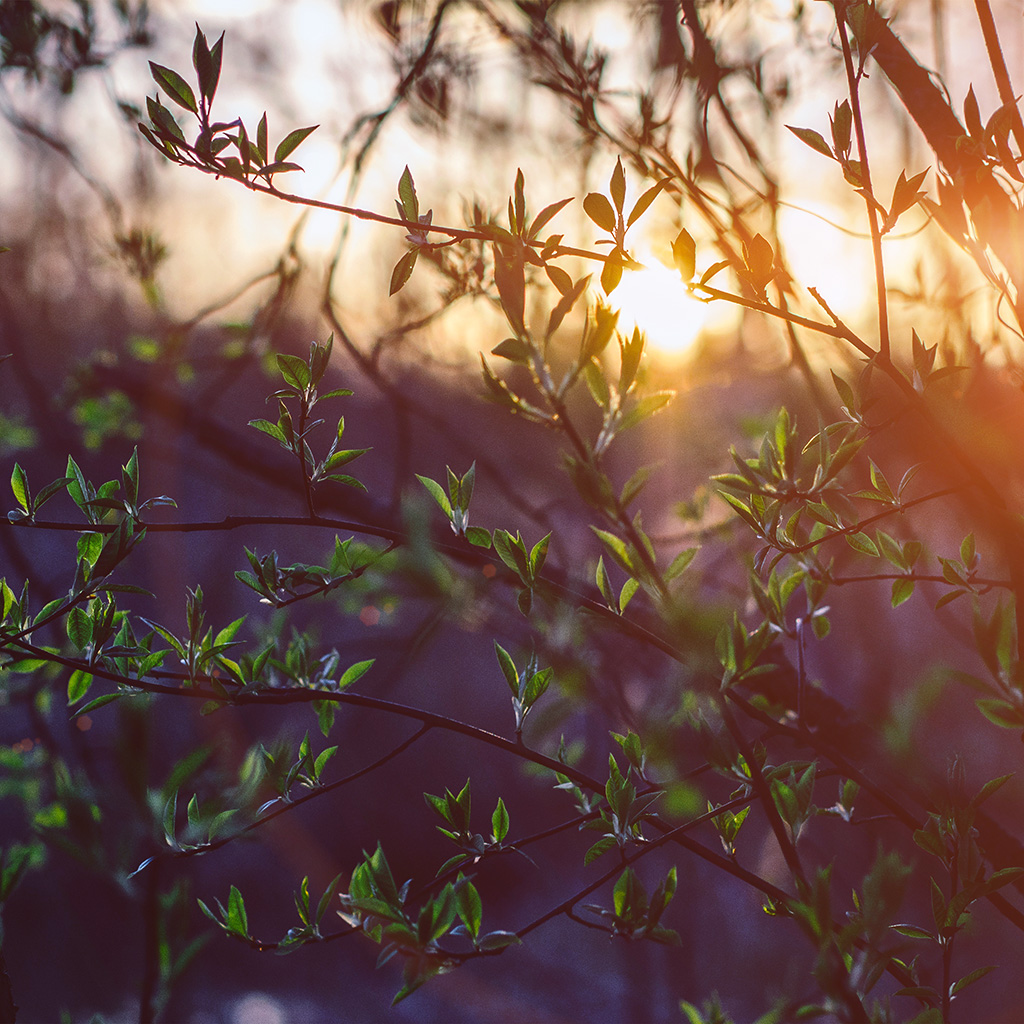 wallpaper-nb89-flower-tree-sunset-nature-flare-wallpaper