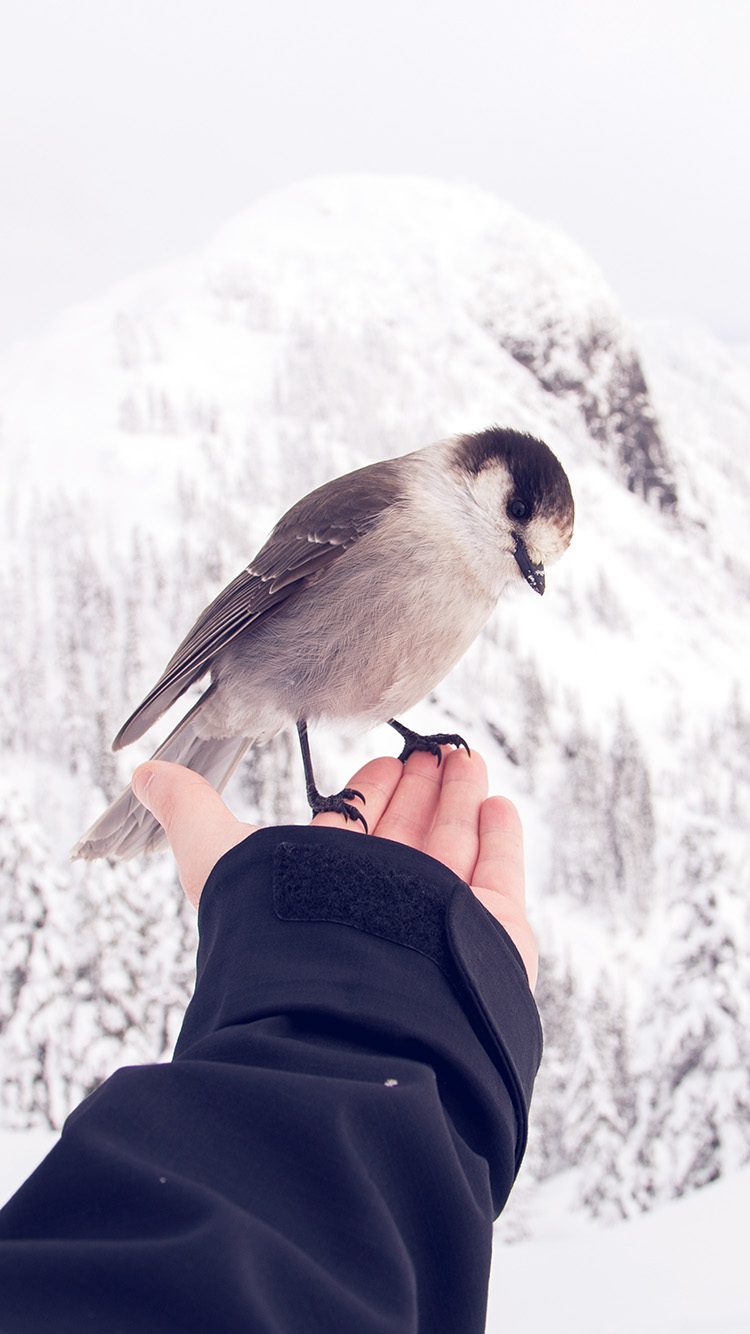 iPhone7papers.com-Apple-iPhone7-iphone7plus-wallpaper-nb92-bird-in-my-hand-snow-winter-cold-animal